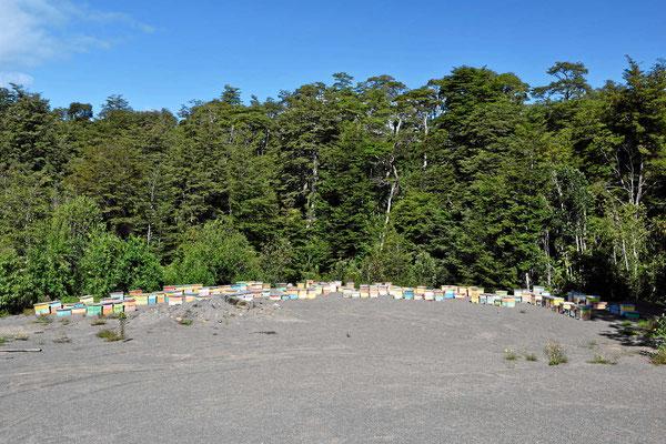 Chile ist ein Honigland, überall stehen die Honigstöcke.