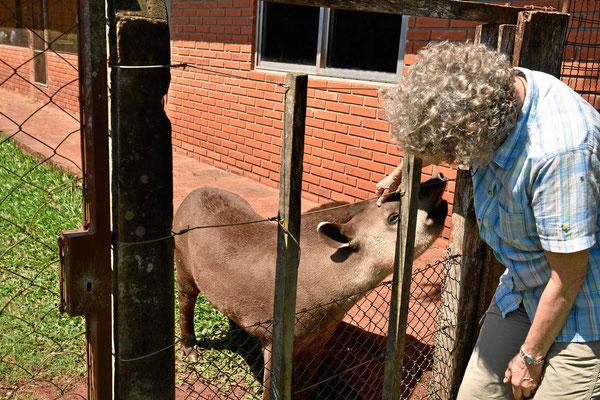 Das Tapirmädchen ließ sich sehr gerne streicheln.