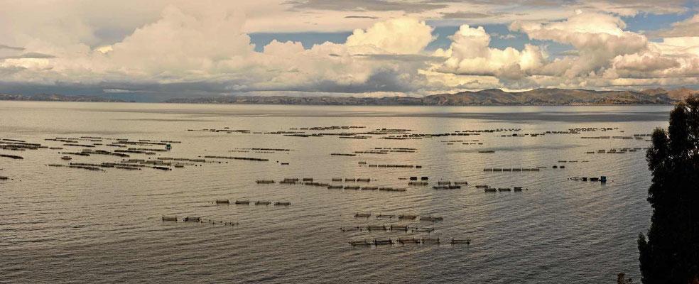 Fischfarmen am Titicacasee.