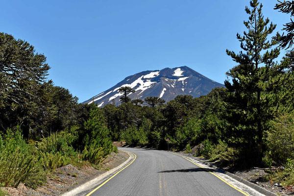 Der Vulkan Lonquimay.