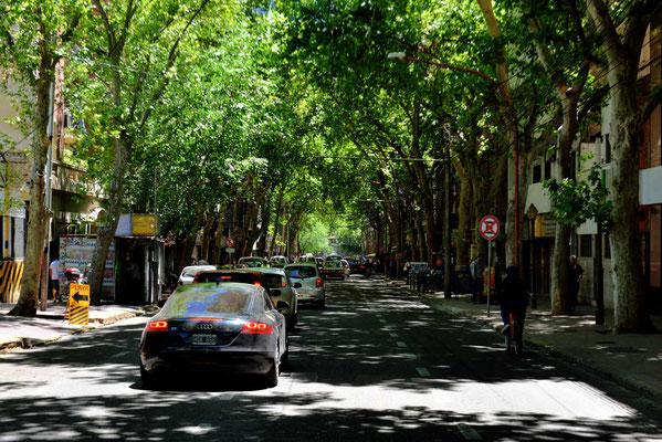 Alle Straßen sind Alleen, man läuft immer im Baumschatten.