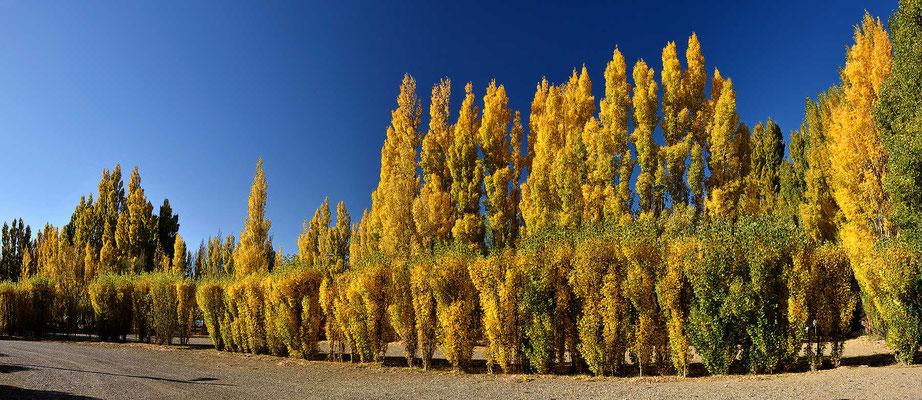 Es ist Herbst in Patagonien, viel Sonne und viel Wind.