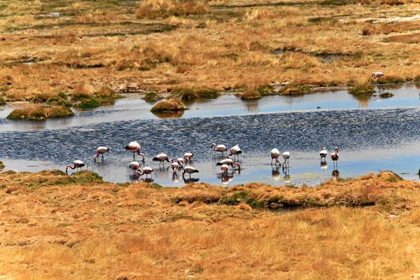 Selbst Flamingos gibt es hier.