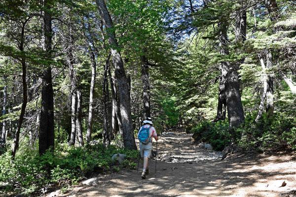 """Für und ungewohnt, dass hier ist """"echter Urwald"""", hier war noch nie ein Holzfäller."""