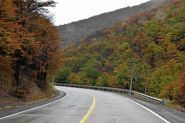 Herbst im Cerro Castillo.