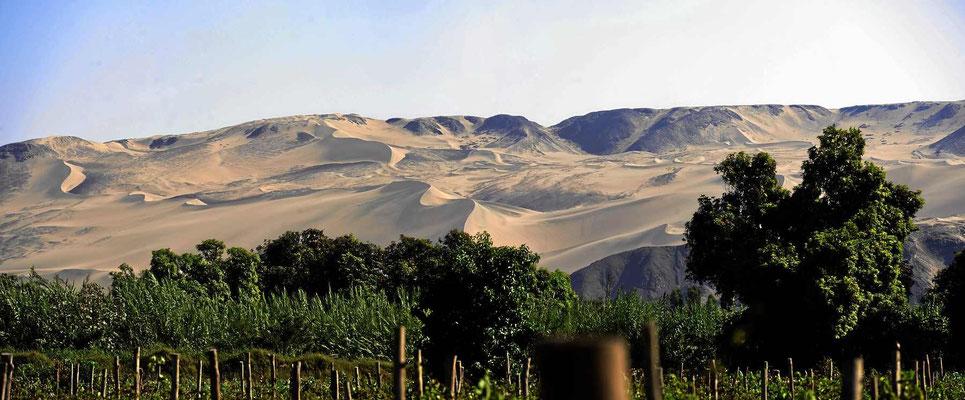 Südlich von Ica gibt es ein größeres Dünengebiet.