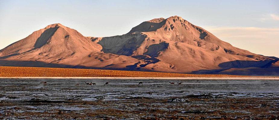 Die Sonne geht auf, eine Gruppe Vicunas überquert den Salzsee.