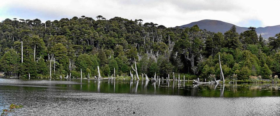 Die Laguna Captren.