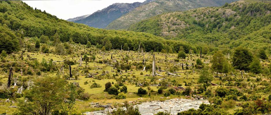 Dafür wird wertvoller Küstenregenwald für die Weiden von ein paar Rindern abgeholzt.