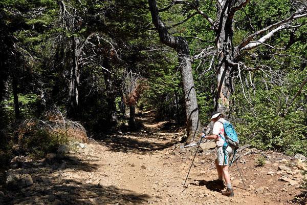 Wanderung durch die Reserva.