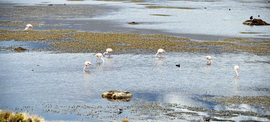 Es ist einer der größten Seen in dieser Höhe weltweit,uns fasziniert die Vogelwelt neben all dem Müll-