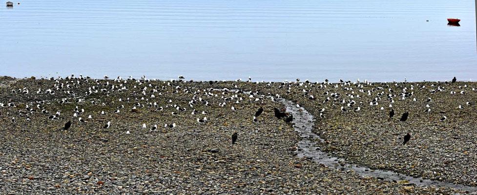 Wo es viele Seevögel gibt, wird es auch viele Fische geben.