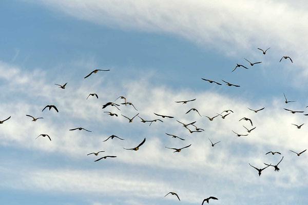 In El Condor ist der Himmel voller Papageien.