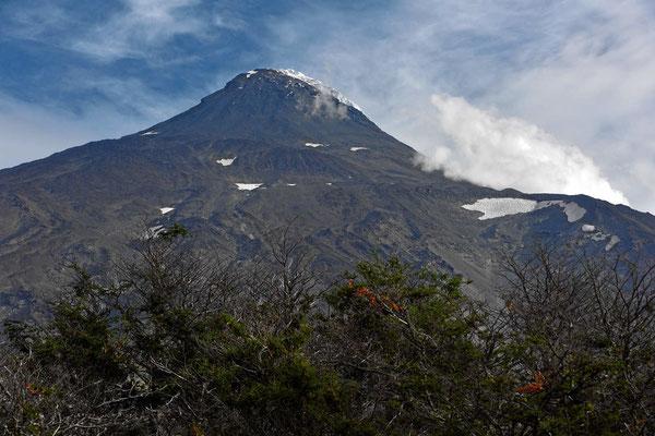 Der Vulkan Lanin, 3776 m hoch und damit fast 1000 m höher als der Villarrica. Leider schauen wir von der falschen Seite auf den Vulkan und können nur die Seitgenkante des Gletschers sehen.