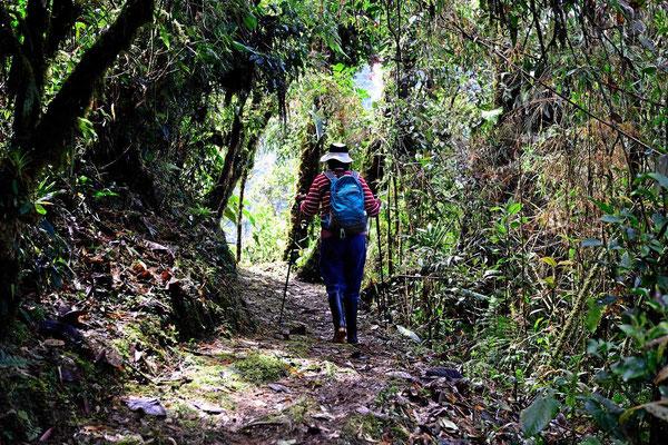 Auf Wanderschaft im Tapichala Schutzgebiet.