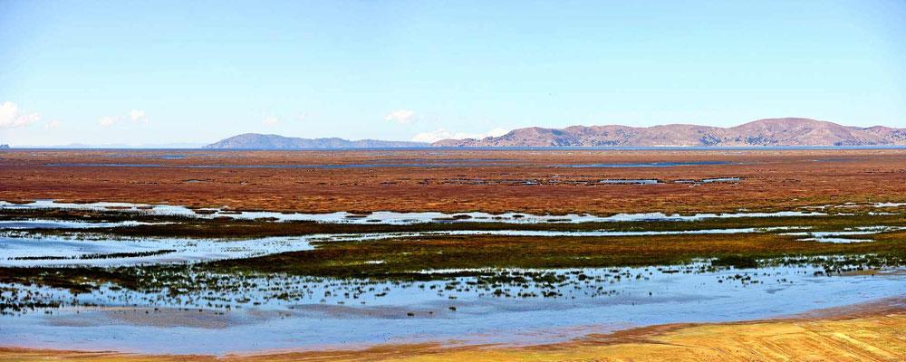 Der Titicaca-See ist zunächst vor lauter Gewächsen im See kaum zu sehen.