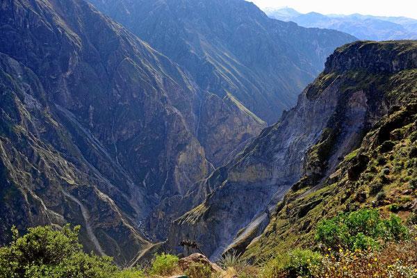 Der Colca-Canyon. Der Fluss liegt 1200 m unterhalb der Straße.