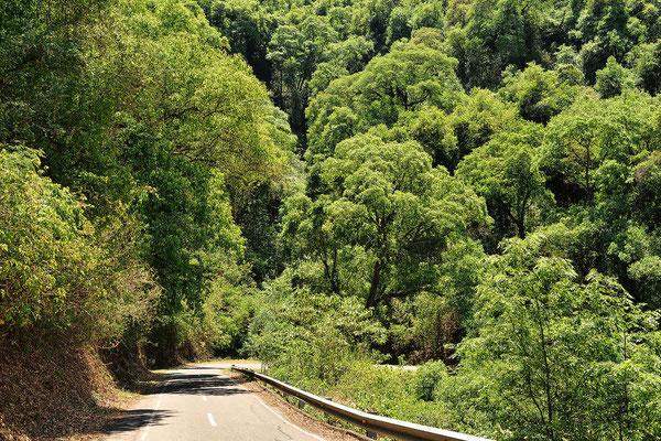 50 km kurvige Strecke durch ein Märchenwald, mehr als 30 km/h kann man nicht fahren.