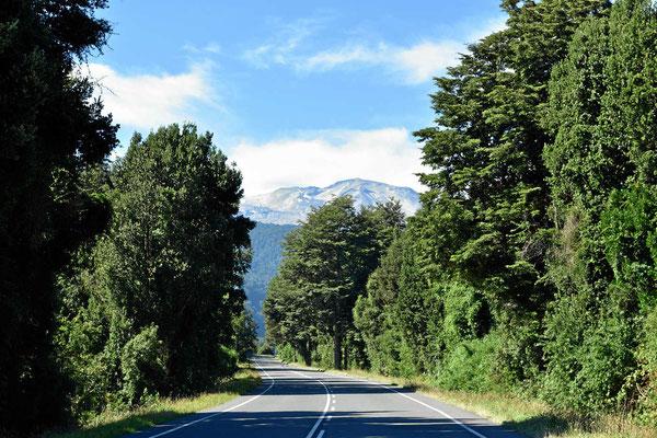 Genußfahrt durch den südlichen Urwald.