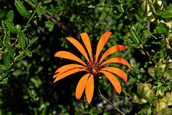 Blume am Wegesrand.