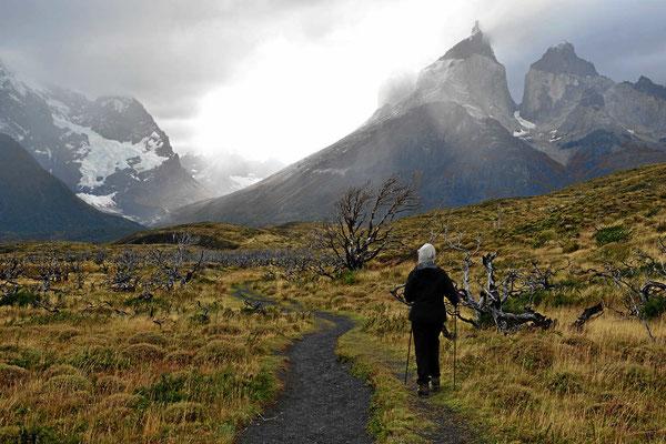 Wanderung zum Mirador am Lago Nordenskjold. Wir nähern uns dem Ziel.
