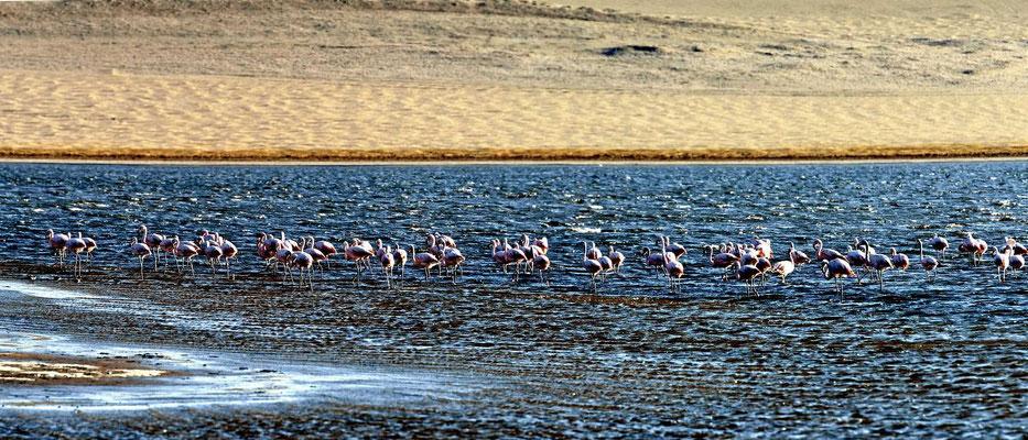 Sie ist voller Flamingos.
