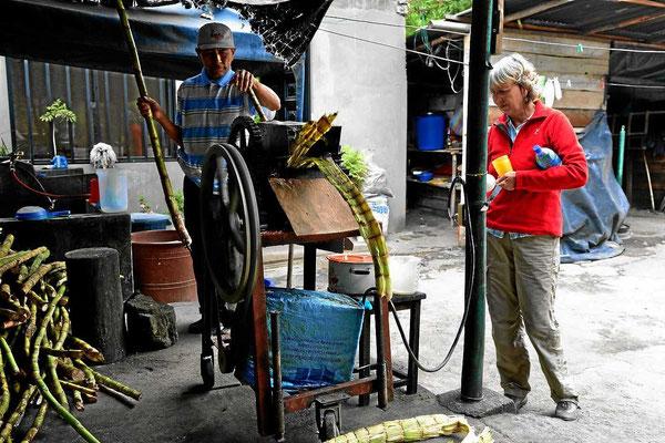 Auf der Fahrt nach Gualacveo kauft Marion 2 l Zuckerrohrsaft. Sie will diesen zusammen mit Naranilla zu einer Marmelade verarbeiten.
