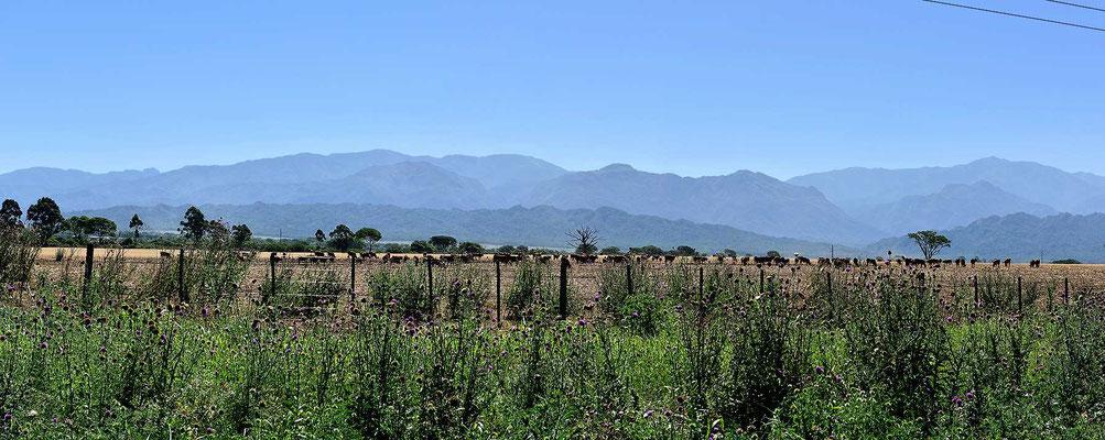 Ich nähere mich Salta und damit den Anden, die Berge rücken näher.