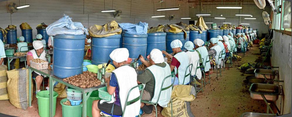 Hier werden die Nüsse per Hand geöffnet, im Vergleich zu oben eine Luxusarbeit.
