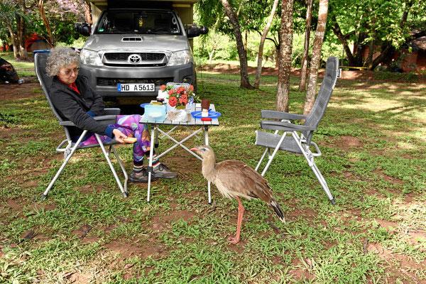 Morgenbesuch auf dem Campingplatz, da will mir ein Vogel zum Geburtstag gratulieren.