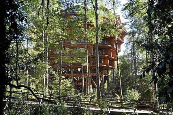 Zum privaten Nationalpark Huilo Huilo gehören auch zwei Edelhotels in einer etwas verrückten Bauweise, dieser Pilz ist eines von beiden.