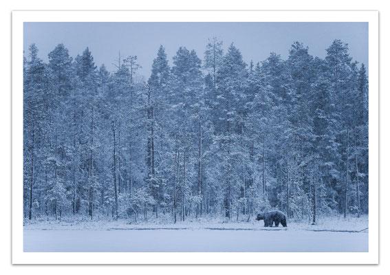 Ref T08 - Ours dans la neige