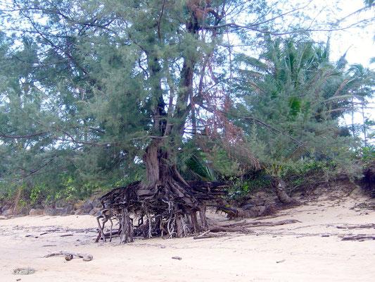 Am Strand von Kauai