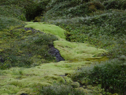 Moosflüsse