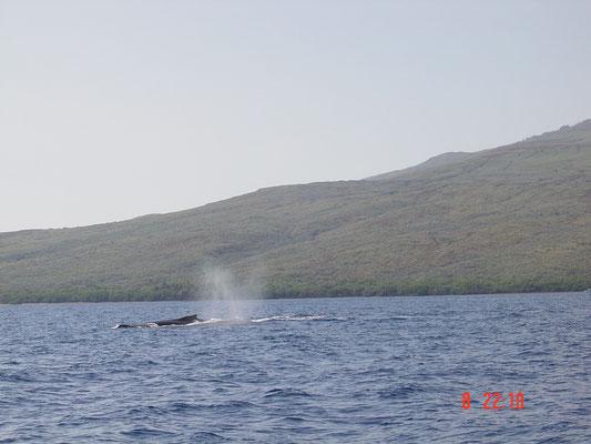 die Wale