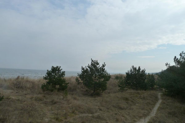 Dünenresidenz Usedon - direkt hinter der Düne an einem kleinen Wäldchen. (Bothmann - Strandnahe Ferienwohnungen, Usedom)