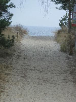 Mit direktem Zugang durch die Düne zum Sand-Strand. Nur 60 m von der  Ferienwohnung zum Strand. (Bothmann - Strandnahe Ferienwohnungen, Usedom)