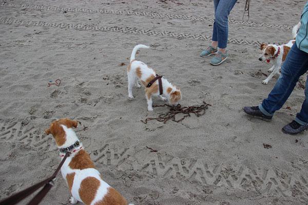Difrida zum 1. Mal am Strand