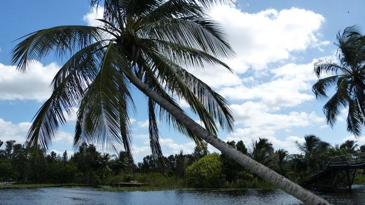 Op het eilandje in de Laguna de Tesoro