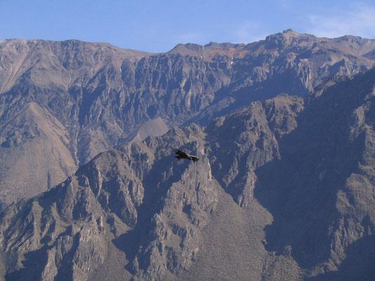 Colca Canyon met Condors