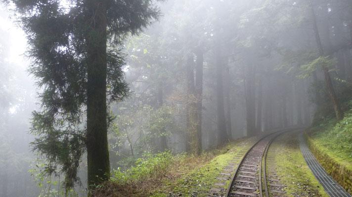 Trail over een verlaten spoorlijn