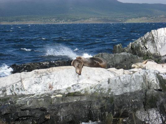 zeeleeuwen