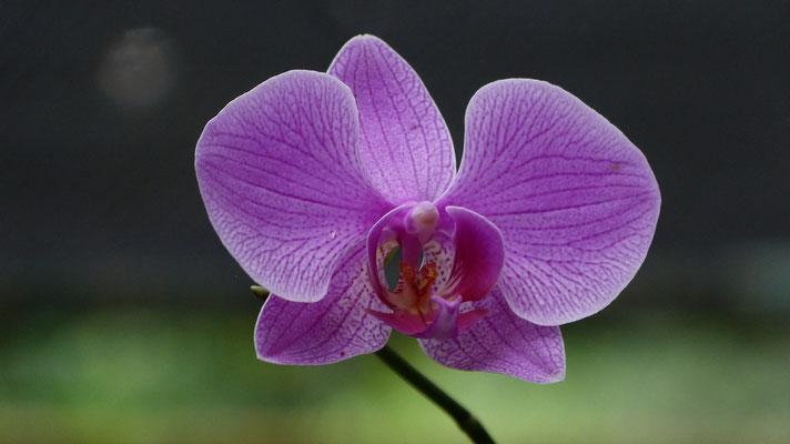 Orchideeëntuin Soroa