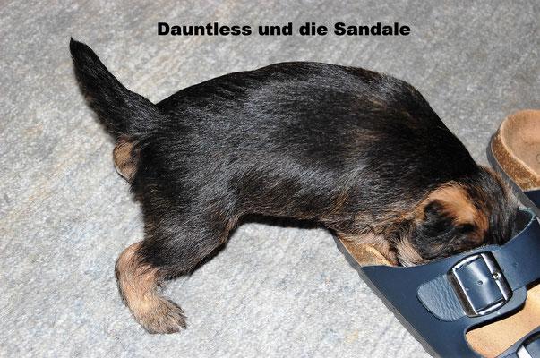 Dauntless untersucht die Sandale