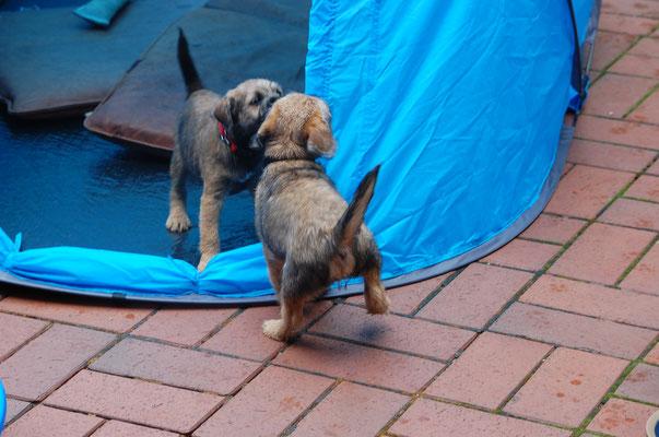 Dreadnought und Damsel Heart haben Spaß im Zelt