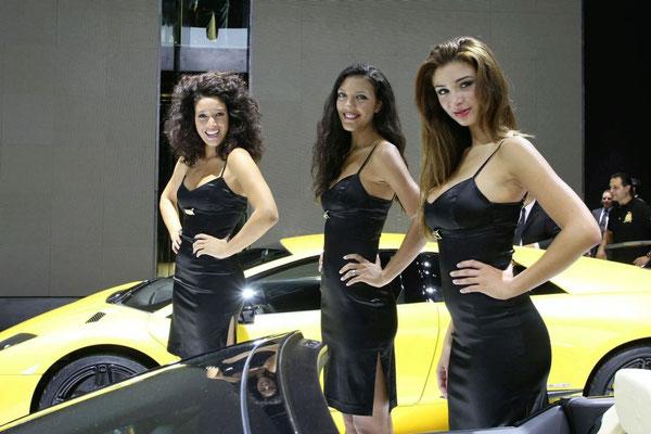 Modelos chihuahua