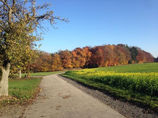 Der Waldrand ist in ca. 10 min Fußweg erreichbar