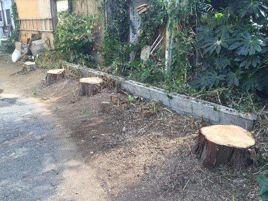 植栽の伐採4