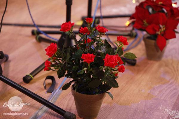 ... und ein paar Rosen für die Damen in der Vocal-Group (Lydia, Bianca, Jutta).