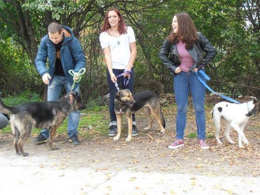 Hunde von links: Voltscho, Nora, Erika